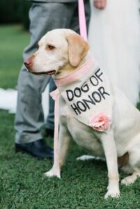 dog in wedding with dog of honor bandana