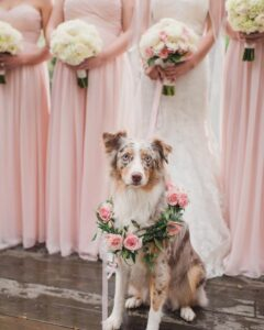 dog with floral wreath